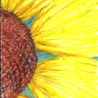 Sunflower in color Art Prints & Posters by Shawn McMurray