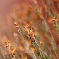 """Orange Dream Grass"" by SherylKaras"