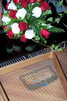 Roses over Piano Strings