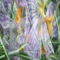 Spring by Patricia Schnepf