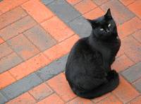 Cat On a Cold Brick Driveway 2