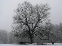 Tree in a Snowstorm