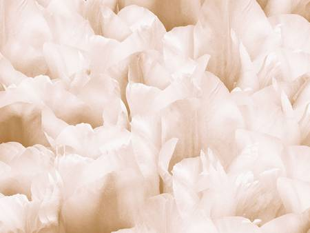 *White Flowers in Abstract...