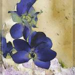 Deep Blue Cyclamen by Deanne Flouton