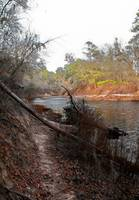 Bank of the Suwannee River