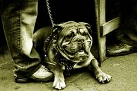 The Camden Town Guard Dog