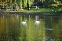 Boston Public Garden Swan Lake