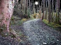 The faery path