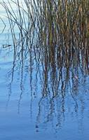 Reed Reflections