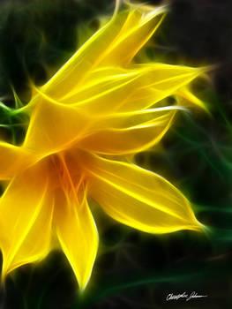 Yellow Daylily 5 Flare