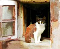 Feline Lookout in Ancient Window