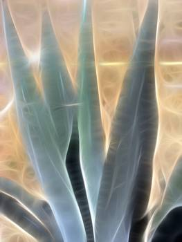 Blue Agave 1 Glow