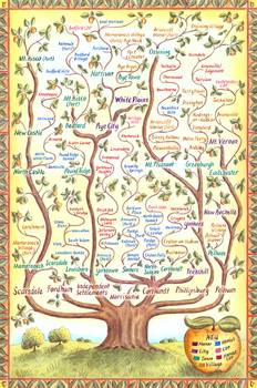 Westchester Family Tree By Jennifer Thermes