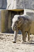 Bodhi celebrates fifth birthday at Columbus Zoo
