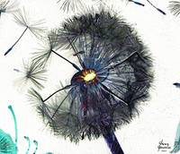 Dandelion Blow-Flower in Purple on White