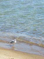 water and bird in Pancake bay