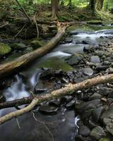 Fallen Log Over the Willowemoc Creek