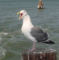 SeaGull at the Jersey Shore