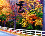 Fence of color