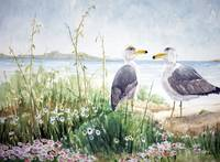 Two Gulls on the shore