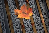 Leaf On A Bench...