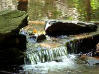 Catoctin Creek, moving water