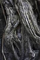 Someone's Watching, Ta Prohm, Angkor Wat
