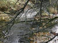 Branches and Creek