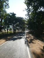 A tree lined road with meadows and plain land on e