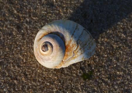 Nautilus & Sand
