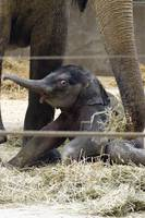 Baby Elephant at Columbus Zoo