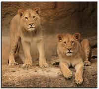 Story of 2 baby Lions