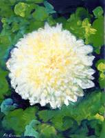 White Chrysanthemum by RD Riccoboni