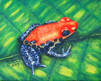 Red-Backed Poison Frog by artist Nancy Young. Giclee prints, art prints, animal art; frog art, a frog on a leaf; Dendrobates Reticulates; from an original  painting