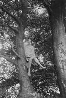 Self up the big beech tree, Bishop's Castle by Priscilla Turner