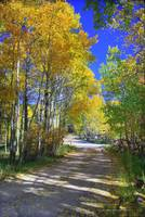 Road at Lion's Camp, Casper Mountain
