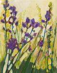 Camas in Bloom by Jennifer Lommers