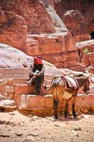 Portrait of Man with Donkey.. Petra,Jordan