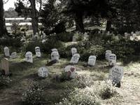 Pet Cemetery, Presidio, California