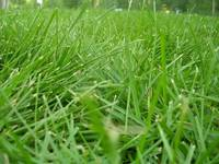 Soothing Grass