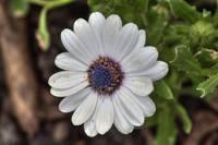 Daisy (IMG_7583) by Jeff VanDyke