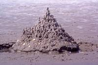 Shelly Sandcastle