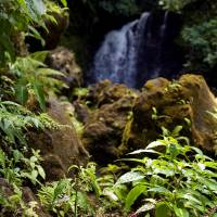 Rainforest Waterfall by Eileen Ringwald