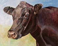 Dolly the Angus Cow