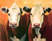 Hereford Cows