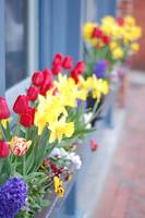 Beautiful Spring Flowerboxes