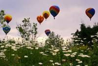 Balloons and Daisies