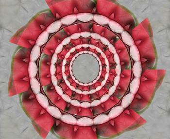 Red Petals Kaleidoscope 1