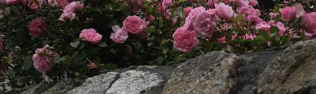 Floral Rose on Stone