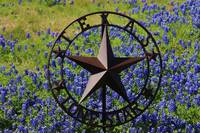Lone Star State Bluebonnets